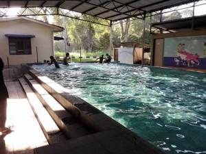 wisma harapan samh pool3